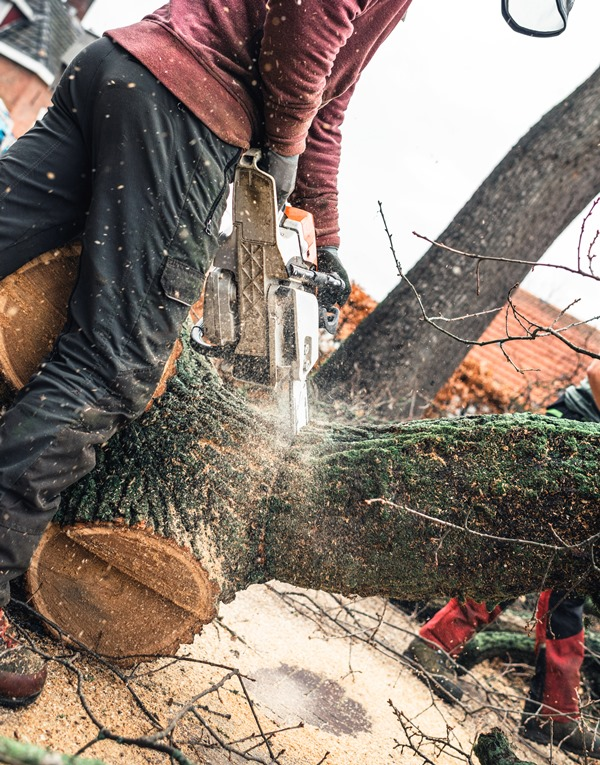 tree stump removal west palm beach