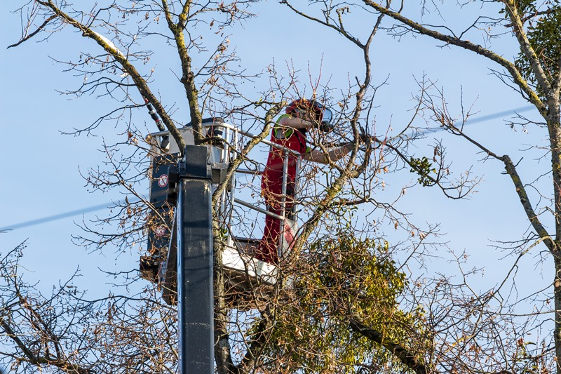 tree service west palm beach