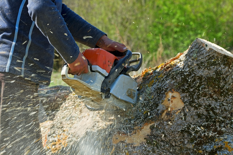 stump removal West Palm Beach